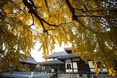 The fall season of Nishi Honganji temple in Kyoto Stock Photo