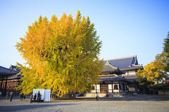 The fall season of Nishi Honganji temple in Kyoto Royalty Free Stock Images