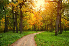 Fall season in park with pathway. Between the trees at sunny day Royalty Free Stock Image