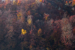 Fall season. This picture was took near Campulung, Romania Royalty Free Stock Images