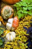 Fall season pumpkins at harvest Royalty Free Stock Photography