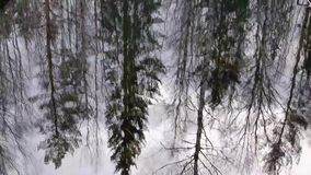 Fall season. Reflection of bare forest in ripple water surface stock footage