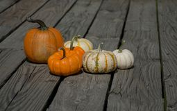 Fall Season. Seasons of harvest and celebration. Different sizes of Pumpkins Stock Images