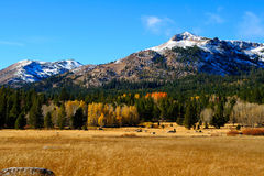 Fall Season In The Sierras Royalty Free Stock Photo