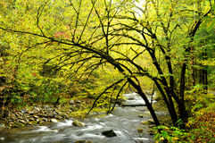 Fall season in the Smokies Royalty Free Stock Images