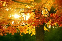 Fall Season. Sunset in the Park. Autumn Season. Nature Photography Collection Royalty Free Stock Photography