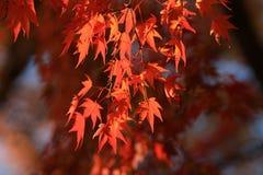 Fall season in Tofukuji Temple Royalty Free Stock Image