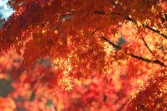 Fall season in Tofukuji Temple Stock Image