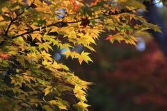 Fall season in Tofukuji Temple Royalty Free Stock Images