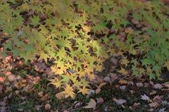Fall season in Tofukuji Temple Stock Photography