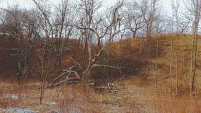 Fall Season Vintage Fade Tree Stock Images