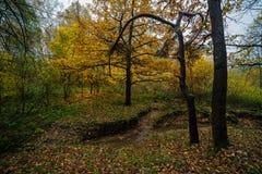 Fall season in the wood Stock Image