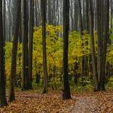 Fall season in the wood Royalty Free Stock Photos