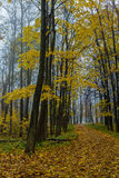 Fall season in the wood Stock Photography