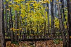 Fall season in the wood Stock Photos