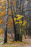 Fall season in the wood Royalty Free Stock Photography