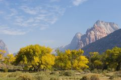 Fall Season in Zion Stock Image