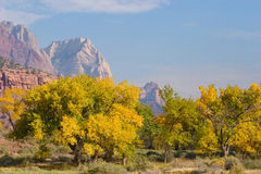 Fall Season in Zion National Park Stock Photos