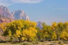 Fall Season in Zion National Park Stock Photos
