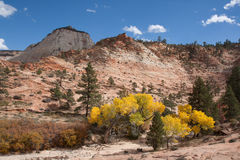 Fall Season at Zion. This was taken during the Fall in the upper plateau area of Zion National Park. During this time the Fall colors compete with the beauty of Stock Photo