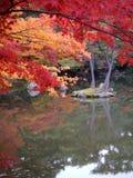 Fall Season2 Stock Photography