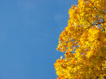Fall seasonal background Stock Photography