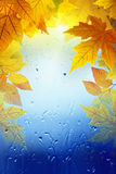 Fall seasonal background Stock Photography