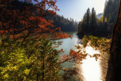 Fall am See McCloud stockfotos