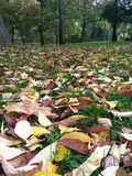 Fall setting Royalty Free Stock Images