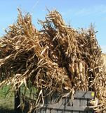 Fall Sheaves Royalty Free Stock Images