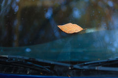 Fall. Single autumn leaf on car windshield Stock Images