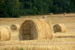 Fall. Slanted field. Royalty Free Stock Image