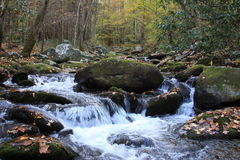 Fall in the Smokies Stock Images