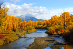 Fall on the Snake River. A river running through a grove of cottonwood trees in the autumn Stock Photos