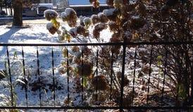 Fall snow Stock Photo