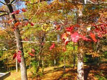 Fall in southeastern USA. Colorful leafage in fall, southeastern USA stock photography