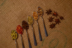 Fall spices Stock Image