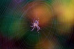 Fall spider web. A common spider in the Pacific Northwest Stock Photos