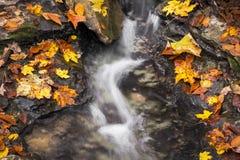 Fall Splash Royalty Free Stock Photography