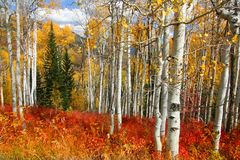 Fall Splender 34. Fall shot of trees in the autumn showing  bright fall colors Royalty Free Stock Photography