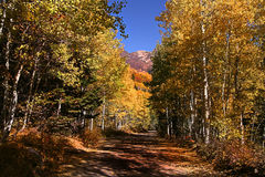 Fall Splender. High mountain road in the fall showing all the fall colors royalty free stock photo