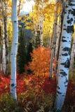 Fall Splender  Royalty Free Stock Images