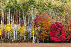 Fall splendor of red, yellow and orange Stock Image
