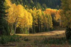 Fall splendor in the Uinta Mountains. Royalty Free Stock Photography