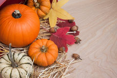 Fall squash with acorns on wood Stock Images