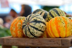 Fall squash Royalty Free Stock Images