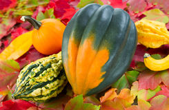 Fall Squash Stock Image