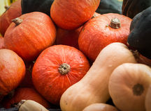 Fall Squash. Cooking pumpkins, butternut squash and acorn squash at an October farmer's market royalty free stock photo