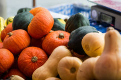 Fall Squash. Cooking pumpkins, butternut squash and acorn squash at an October farmer's market, scales out of focus in the background royalty free stock image