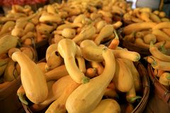 Fall Squash and Gourds Royalty Free Stock Images